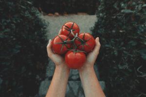 Farm to table restaurant using fresh tomatoes