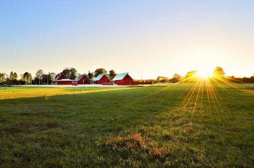 Sun rise on a farm